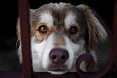 occhi da cane (gianluca_98) Tags: 35mm pentax k7 pentaxk7