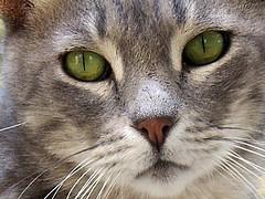 Casual cats 03 (Tino Correra) Tags: cats pets gatti anumali