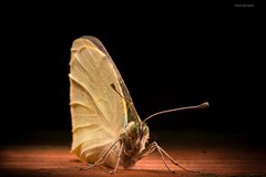 Light-painting a butterfly (Windows FOR the Soul - Photos) Tags: lightpainting butterfly macrophotography nikond600 nikonmicro105mmf28