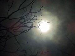 (Photosintheattic) Tags: sky moon color tree night clouds evening haze branches calming fullmoon mysterious moonlight billows moonlite