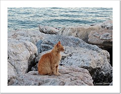 Gato costero (Lourdes S.C.) Tags: costa mar gatos animales