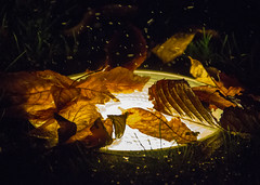 Buscando calor (Imthearsonist) Tags: chile city nightphotography santiago light urban tree water leaves night objects things canoncamera canonreflext3i