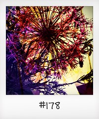"""#DailyPolaroid of 24-3-16 #178 • <a style=""""font-size:0.8em;"""" href=""""http://www.flickr.com/photos/47939785@N05/26848028935/"""" target=""""_blank"""">View on Flickr</a>"""