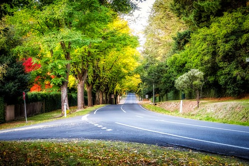 Mt Macedon Autumn Colours-19