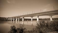 Pont TGV _ Avignon (Rmi Avignon) Tags: bridges pont avignon ponts rhone