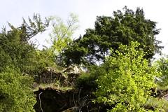 Green edge (tillwe) Tags: tree green blackforest tillwe allerheiligen oppenau 201605 norschwarzwald hochzeitsfeierjd