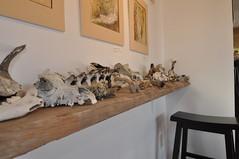Sticks and Bones Opening (ArcticCoyote) Tags: art skulls sticks artists bones artshow openingnight yellowknife luckyjackpress galleryon47th