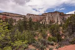 IMG_5804.jpg (scott_bohaty) Tags: season utah nationalpark spring state time location zion