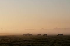 Koeien in de mist (Rene Meex) Tags: mist natuur landschap koe luchten zonsopkomst