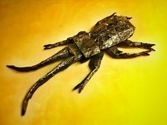 Longhorn Beetle v4 (eteokles) Tags: origami beetle longhorn origamiforum