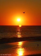 sunset gull - Cape May, NJ (Jen MacNeill) Tags: ocean trip sunset sea vacation orange sun beach nature water canon newjersey sand seagull gull nj wave atlantic shore eastcoast t3i macneill gypsymarestudios jennifermacneilltraylor