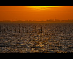 Golden hour at the Oosterschelde (Wim Koopman) Tags: blue trees light sunset sea orange sun holland reflection water netherlands dutch yellow river landscape photography gold photo nikon waves mood view bright magic horizon stock nederland atmosphere delta zeeland hour stakes stockphoto stockphotography oosterschelde d90 estuarium oesterdam oister wpk