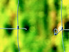 broken (olipennell) Tags: macro fence germany web olympus zaun hff spinnweben neckarsulm badenwürttemberg scheuerberg