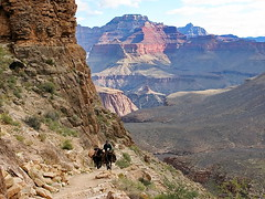Wrangler & mules heading up South Kaibab Trail - Grand Canyon (Al_HikesAZ) Tags: park camping arizona nationalpark cowboy hiking grandcanyon south grand canyon hike cargo adventure trail national backpacking backcountry rim mules mule southrim switchbacks wrangler southkaibabtrail ascending grandcanyonnationalpark kaibab southkaibab alhikesaz belowtherim gc2011 grandviewyakipoint2011 cargomules