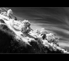 Slope in IR (josefrancisco.salgado) Tags: newzealand sky bw cloud tree blancoynegro monochrome clouds ir bay blackwhite flora nikon hill canterbury cielo nubes rbol infrared southisland grayscale nikkor peninsula bankspeninsula nube loma baha pennsula infrarrojo islasur littleakaloa d80 littleakaloabay 1424mmf28g tewakaoaoraki infraredconvertedd80