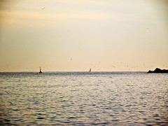 Seagulls (anniagavañach) Tags: barcelona beach mar rocks mediterraneo flock playa barceloneta gaviotas gavines bandada hotelw mediterranenan depesca fishingsea