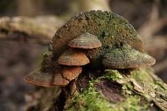 Life after Death (joeandersun) Tags: winter digital forest moss woods sony fungi deadtree fullframe dslr 287528 a850 alphamount sonya850 sal2675