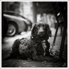 Nameless #4 (Francesco Agresti  www.francescoagresti.com) Tags: street people blackandwhite bw italy dog monochrome photography blackwhite campania bokeh sony streetphotography squareformat reportage helios nex helios58mm nex3 sonynex s8un3no frankies8un3no vignettingsquare