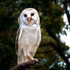 Fine pasto (Tati@) Tags: natura pasto owl animali gufo mygearandme mygearandmepremium mygearandmebronze mygearandmesilver mygearandmegold mygearandmeplatinum mygearandmediamond
