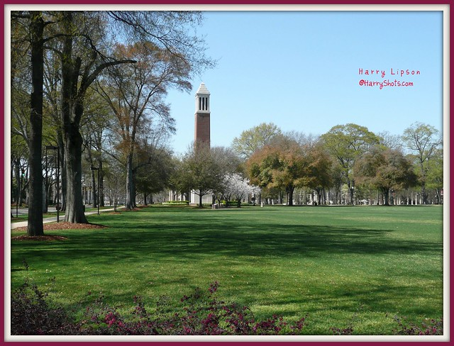 University of Alabama Quadrangle.  Roll Tide!