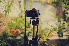surprise of love ♥ (Natália Viana) Tags: love photography nikon luck fotografia câmera tripé natáliaviana