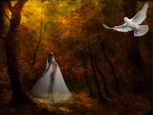Angelical Forest