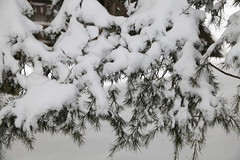 Playing With Snow Near Kashmir Point  | Murree/Bhurban Winter Trip 2012 | 07-09 01 2012 (KNizam Artwerk) Tags: trip winter snow playing point with near 01 kashmir 2012 0709 murreebhurban