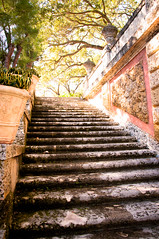 garden steps (raspberrytart) Tags: stairs garden nikon florida steps vizcaya d90
