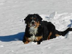Fritzi bei  Skitour