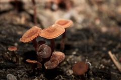 Should I Eat These? (Joshua Drew Vaughn) Tags: china orange color macro mushrooms colorful asia 创意 中国 magicmushrooms 有趣的 orangemushrooms 小 宏 colorfulmushrooms
