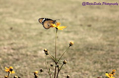 Butterfly (RajivSinha Photography) Tags: