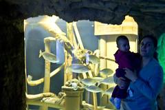 IMG_9065 (mert alp ztrk) Tags: ocean life sea fish nature water silhouette coral kids children wonder zoo aquarium shark amazing natural under cities twin istanbul trail tropical reef poseidon tropics bule tang atlantik elif arapaima akvaryum florya balk tropik istanbulaquarium istanbulakvaryum svey istabulakvaryum