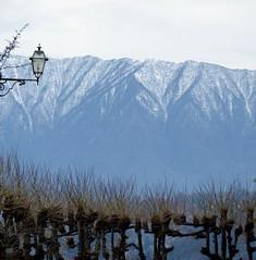 Menaggio (_EdG_) Tags: trees winter italy mountain lake snow italia comolake lagodicomo menaggio 5photosaday