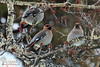 26/366 ~ Resting... (Kasrielle) Tags: winter bird birds porject365