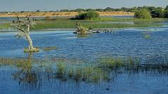 Lake of VIllage Bhimasar, Kachchh,Gujarat