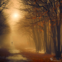 one missing moment (ildikoneer) Tags: autumn trees winter shadow sun mist snow fall nature leaves sunshine fog forest landscape leaf hungary path figure dobogk bestcapturesaoi elitegalleryaoi