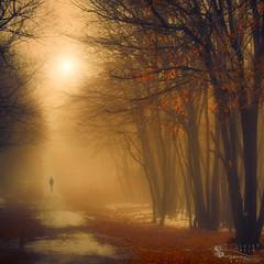 one missing moment (ildikoneer) Tags: autumn trees winter shadow sun mist snow fall nature leaves sunshine fog forest landscape leaf hungary path figure dobogk bestcapturesaoi elitegalleryaoi