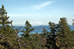 FROM Mt TOLMIE  (18) (DESPITE STRAIGHT LINES) Tags: park trees usa mountain canada tree forest landscape climb woodlands rocks day bc view britishcolumbia victoria clear washingtonstate height mountbaker mtbaker vantagepoint mttolmie mounttolmie nion d700 mounttolmiepark nikond700 mttolmiepark ilobsterit