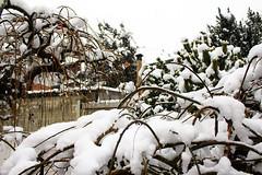levels (gianluxa78) Tags: trees white snow cold tree ice torino snowy branches january snowfall levels madeinitaly trofarello