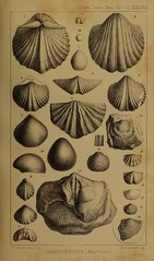 n164_w1150 (BioDivLibrary) Tags: geology periodicals smithsonianlibraries bhl:page=36164442 dc:identifier=httpbiodiversitylibraryorgpage36164442