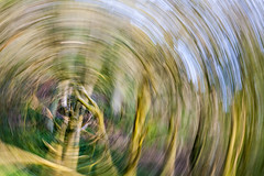 Rotating Newton Woods (Martin@Hutton) Tags: camera tree movement abstarct icm intentional