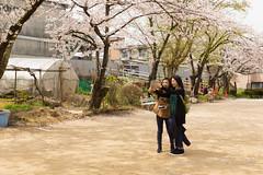 / Hida Takayama (kimtetsu) Tags: people girl japan spring  cherryblossom  takayama gifu
