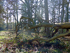 Nature (guivicd) Tags: wild france tree nature vegetable arbre fort vegetal