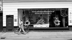 Every season a new window... (jaap spiering   photographer) Tags: blackandwhite bw monochrome noiretblanc zwartwit denhaag nb thehague 070 jaapspiering jaapspieringphotographer jaapspieringfotografie