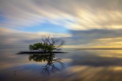 20160508bbeach13 (Michael Statham) Tags: longexposure sunrise reflections dawn minimalism townsville bushlandbeach
