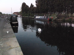 Selby Canal (rubber rat productions) Tags: england canal swan dusk yorkshire northyorkshire barges selby selbycanal
