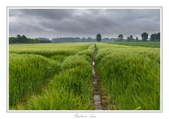 on a rainy day (Tom Baetens) Tags: sky tree water barley clouds landscape nikon view belgium outdoor walk wandeling 2016 d610 1835mm tombaetens