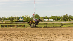 Opening Day at Fort Erie Race Track (rumimume) Tags: horse ontario canada racetrack canon photo still sigma racing niagara potd thoroughbred openingday picoftheday 2016 forterie 550d t2i twilighttuesday rumimume