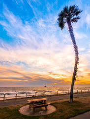 Huntington Beach (meeyak) Tags: ocean california park trees sunset sky beach nature colors vertical clouds outdoors happy nikon view cloudy huntington palmtrees socal tall southerncalifornia orangecounty oc westcoast huntingtonbeach hb d800 1635mm meeyak
