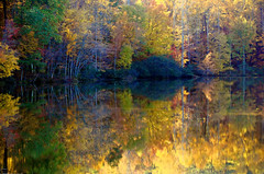 bringing the light down (bdaryle) Tags: autumn light water reflections sony explore diffused greatphotographers 100commentgroup bdaryle blinkagain greaterphotographers